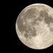 spring moon 7 april 2020
