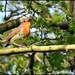 Cycle track robin singing his lovely song