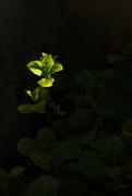 8th Apr 2020 - green light