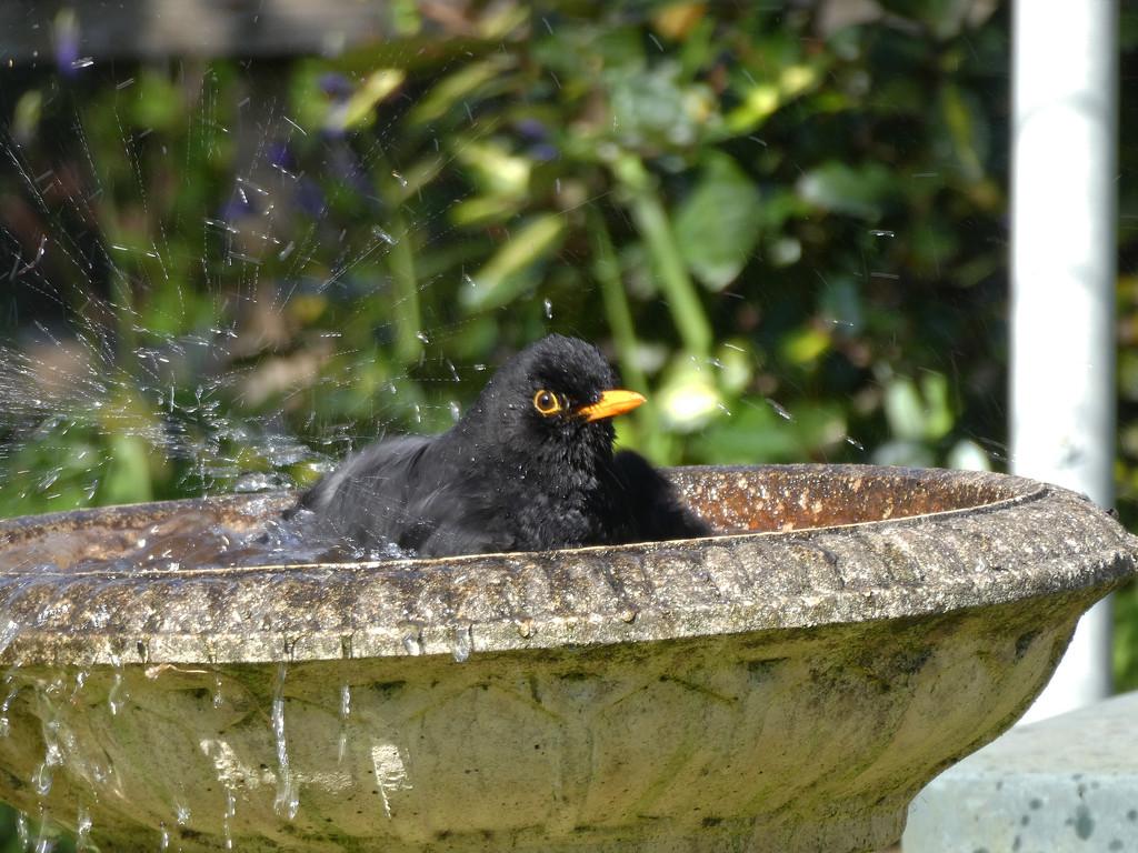 Bath Time by cmp