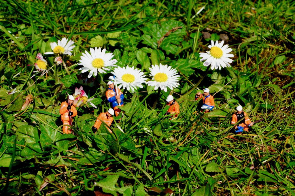 DAISY CHAIN OF EVENTS - DAY 8  by markp