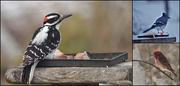 8th Apr 2020 - A few birds visiting my backyard