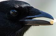 8th Apr 2020 - My house through a Magpies eye