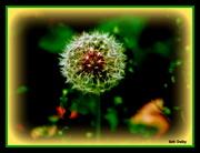 7th Apr 2020 - Dandelion Seed