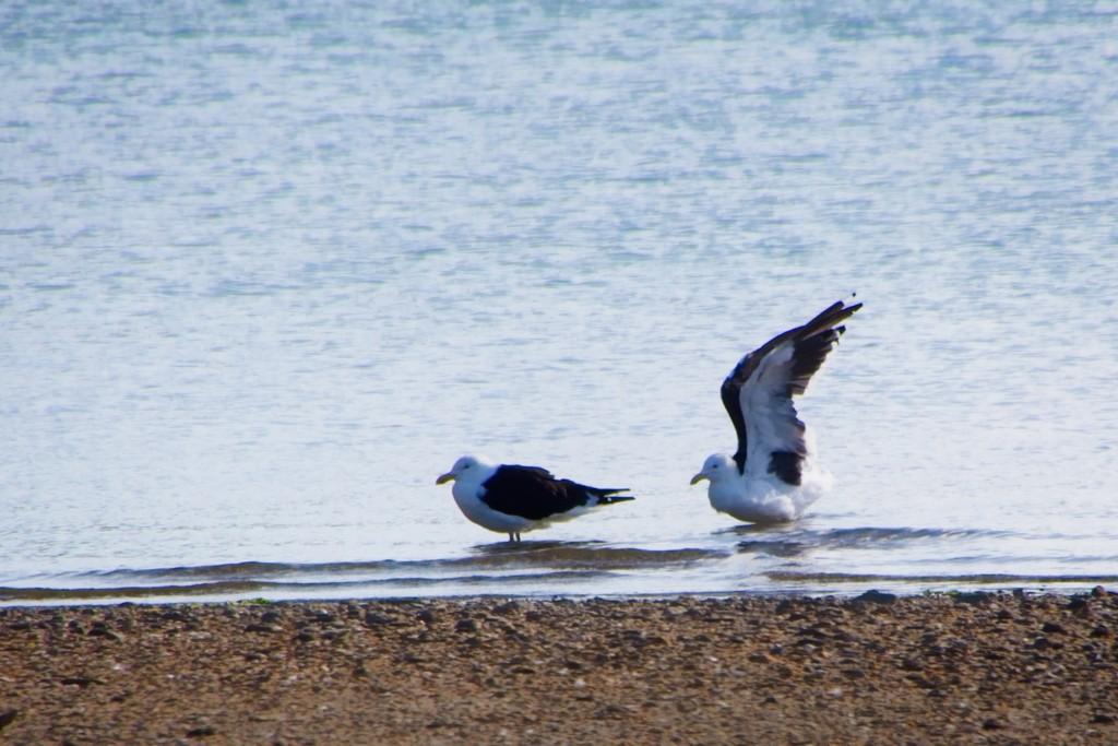 The landing by kiwinanna