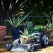 Froggy gardeners