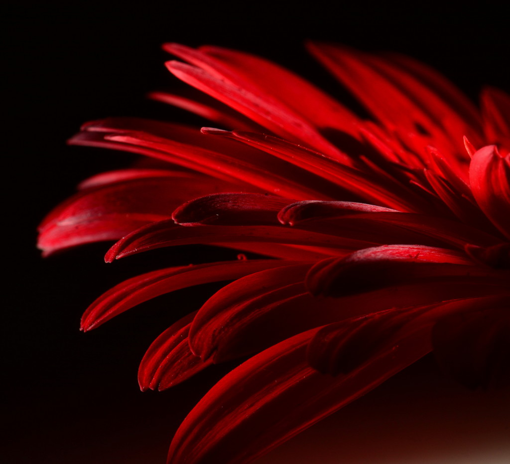Red Hot by jayberg