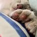 Percy's Paws