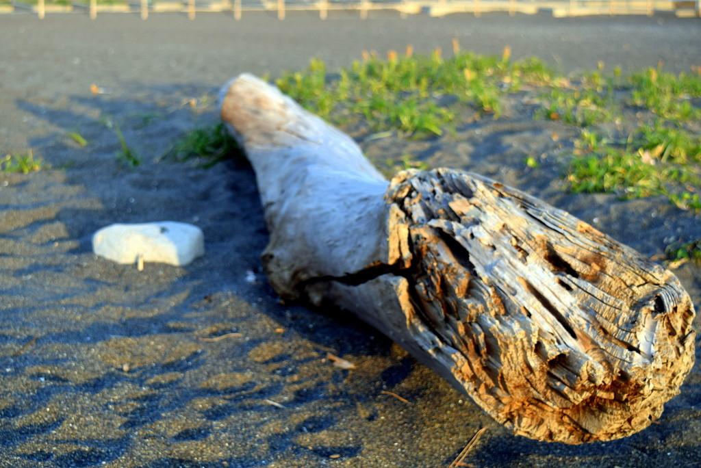 2020-04-09 Driftwood by cityhillsandsea