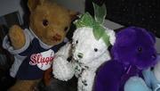 9th Apr 2020 - 30 Shots - Teddy - Shot 9