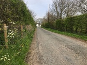9th Apr 2020 - Well Lane.... nearly home!