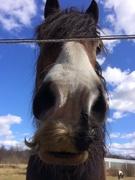 9th Apr 2020 - Salvador Dali back as a horse?