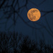 Super Moon by tosee