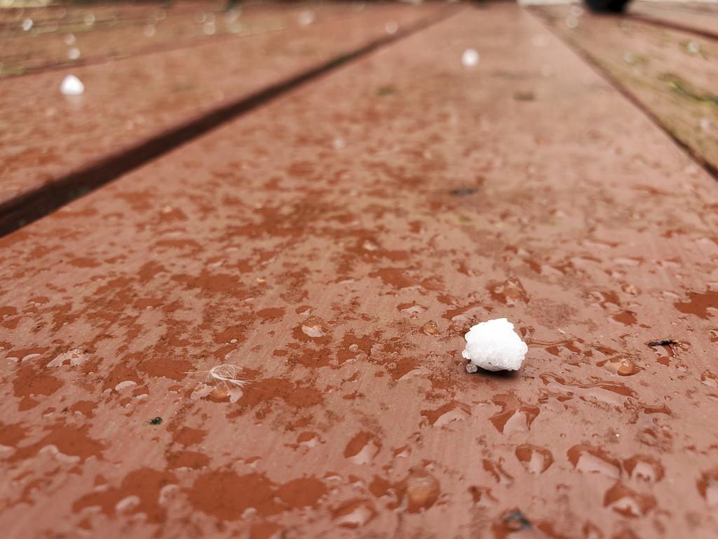 Miniature snowball - April 2020 by houser934