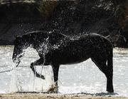 10th Apr 2020 - Happy Horse Splashing in the River