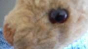 10th Apr 2020 - 30 Shots - Teddy - Shot 10