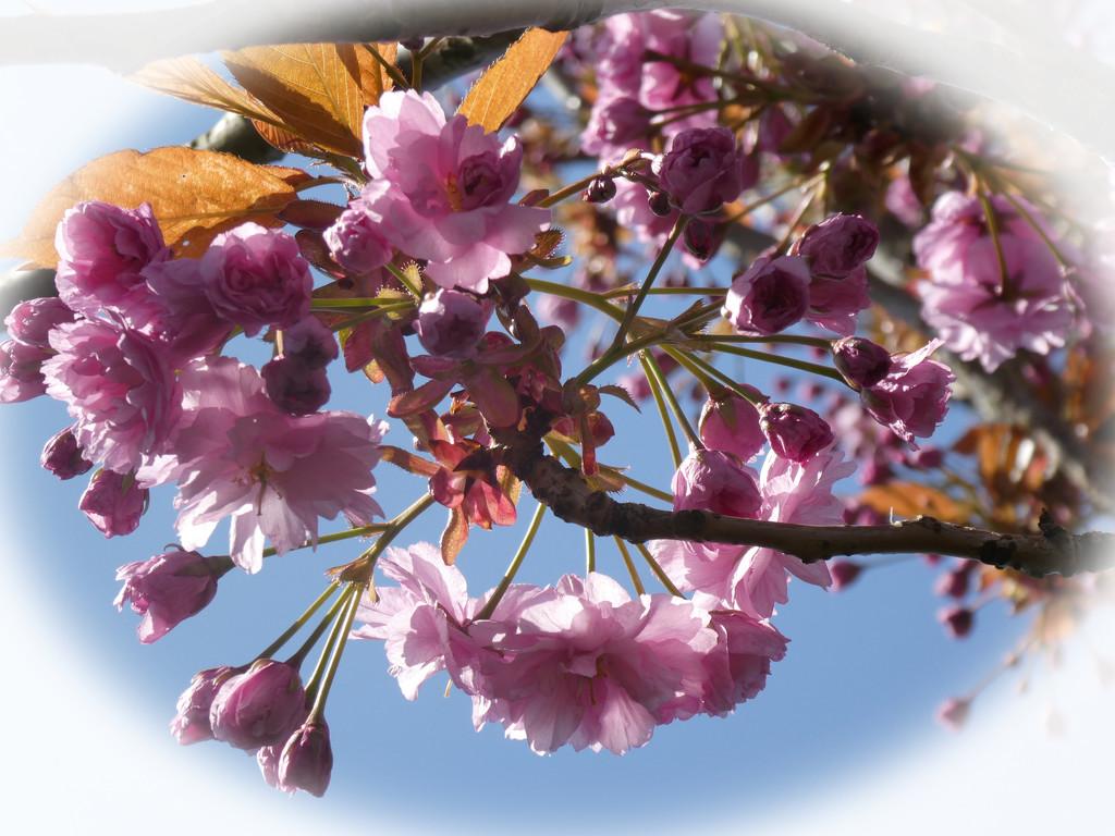 Springtime by cmp