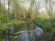 10th Apr 2020 - Reflections