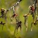 Sneeze season will start soon by haskar