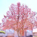 Painterly Magnolia
