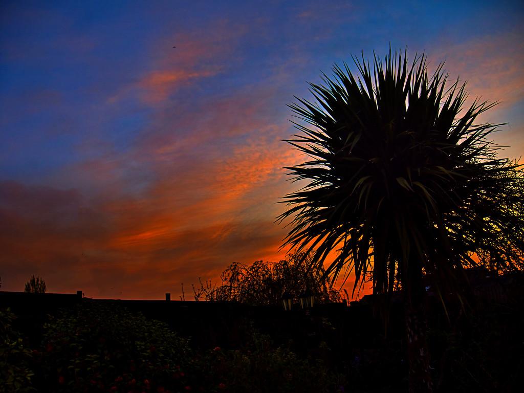 Garden Sky. by tonygig