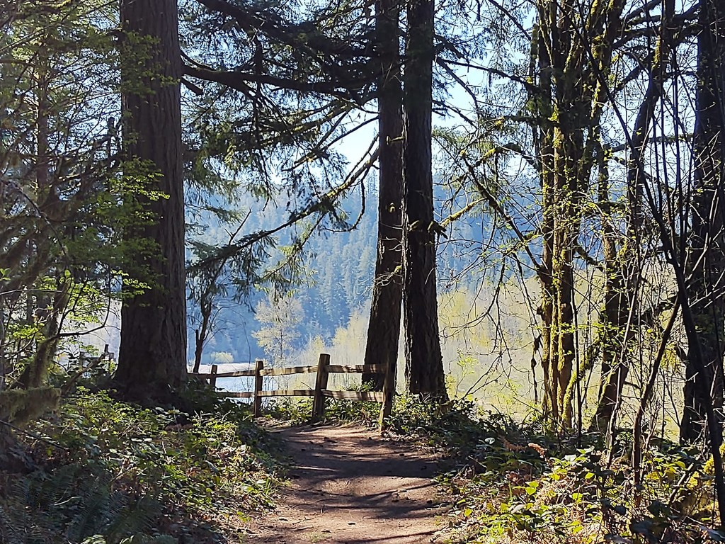 The 1,000 Acre Wood (Oxbow Park, Gresham, OR) by teiko