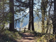 11th Apr 2020 - The 1,000 Acre Wood (Oxbow Park, Gresham, OR)