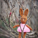 There's a Bunny in the Bush by gardencat