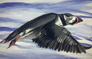 13th Apr 2020 - Puffin in flight (painting)