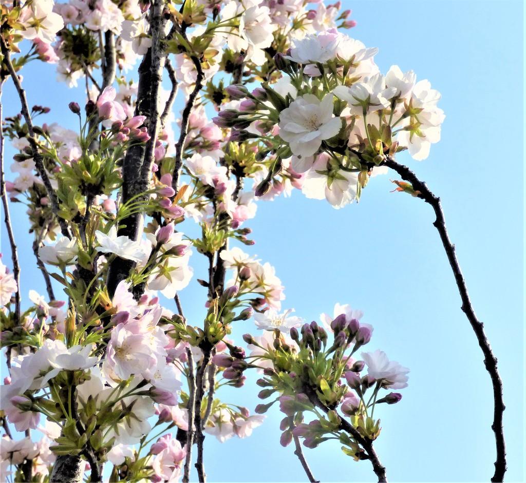 Blossom  by beryl