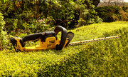 13th Apr 2020 - Hedge Trimmer