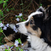Flowers - Day 13 by salza