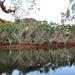 Fortescue River 2