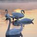 Four Swans  by moonbi