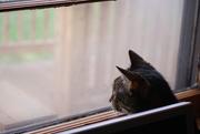 14th Apr 2020 - Abby the cat
