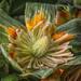 Tulip Poplar Bloom by kvphoto