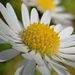 DAISY CHAIN OF EVENTS - DAY 14 by markp