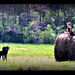 Hay Is For Horses Not Splits