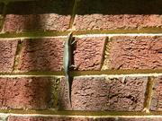14th Apr 2020 - Lizard on Bricks
