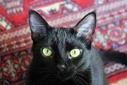 14th Apr 2020 - Elsie eyes
