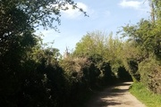 15th Apr 2020 - Green Lane With Church In The Distance