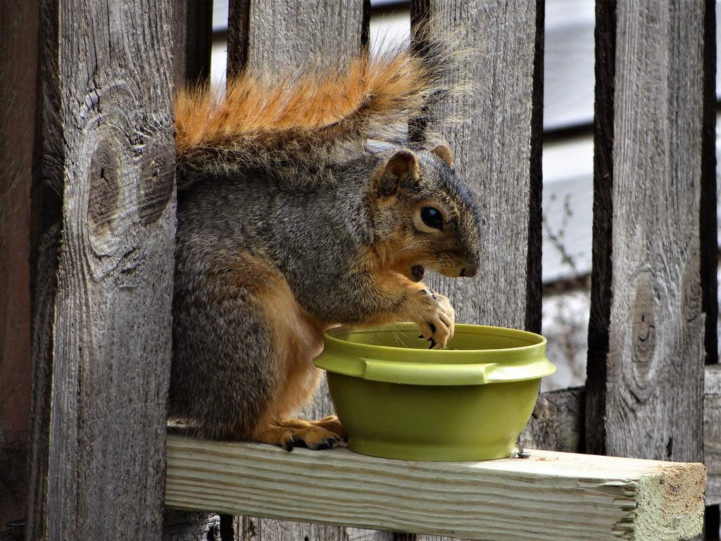 I like the new feeder! by brillomick