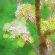 15th Apr 2020 - Blossom