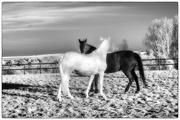 15th Apr 2020 - Black & White