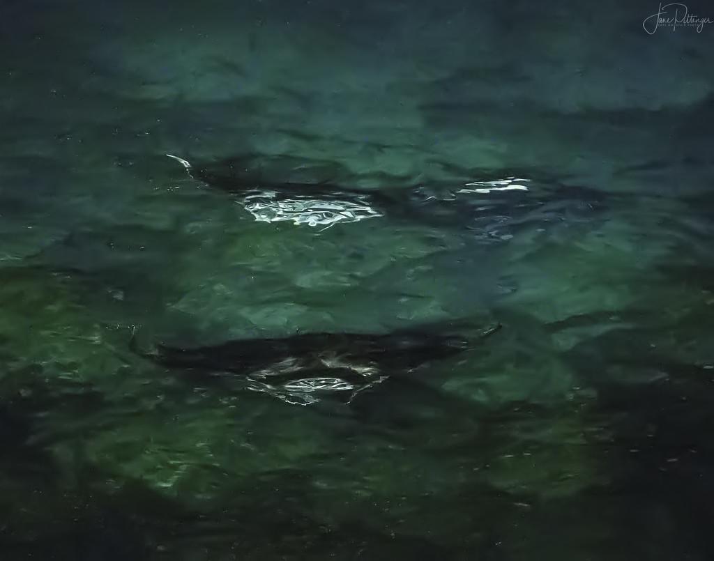 Three Manta Rays  by jgpittenger