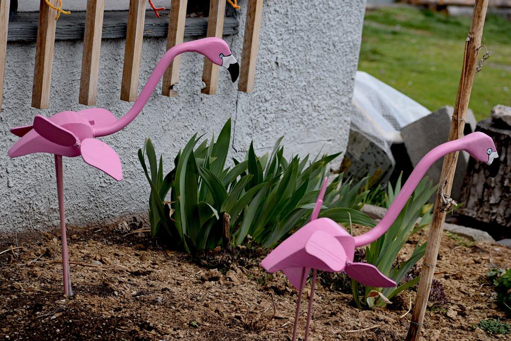 Montana Flamingos by bjywamer