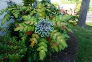 17th Apr 2020 - A Showy Plant