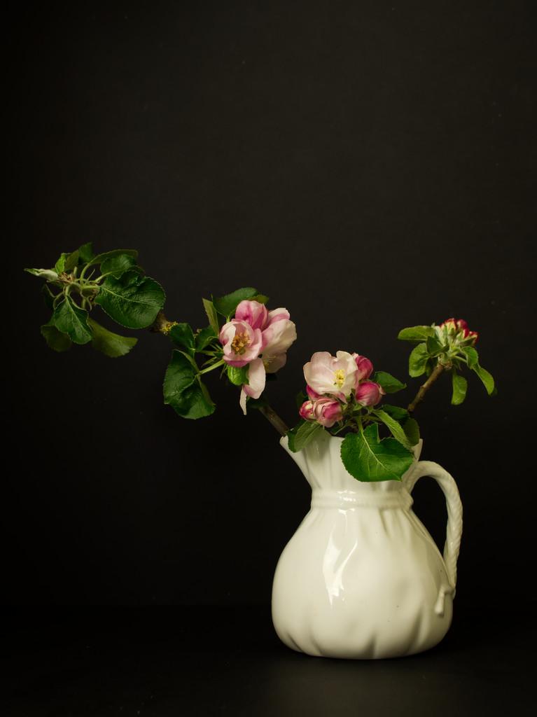 Apple blossom in vase by jon_lip