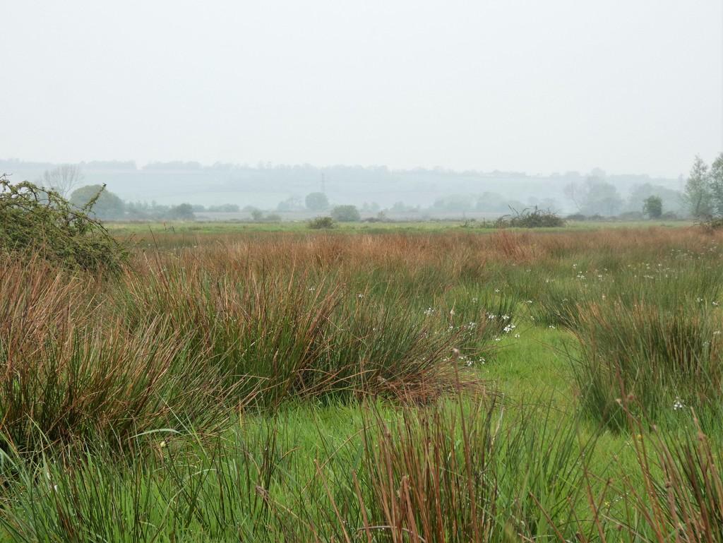 Moors in the rain by julienne1