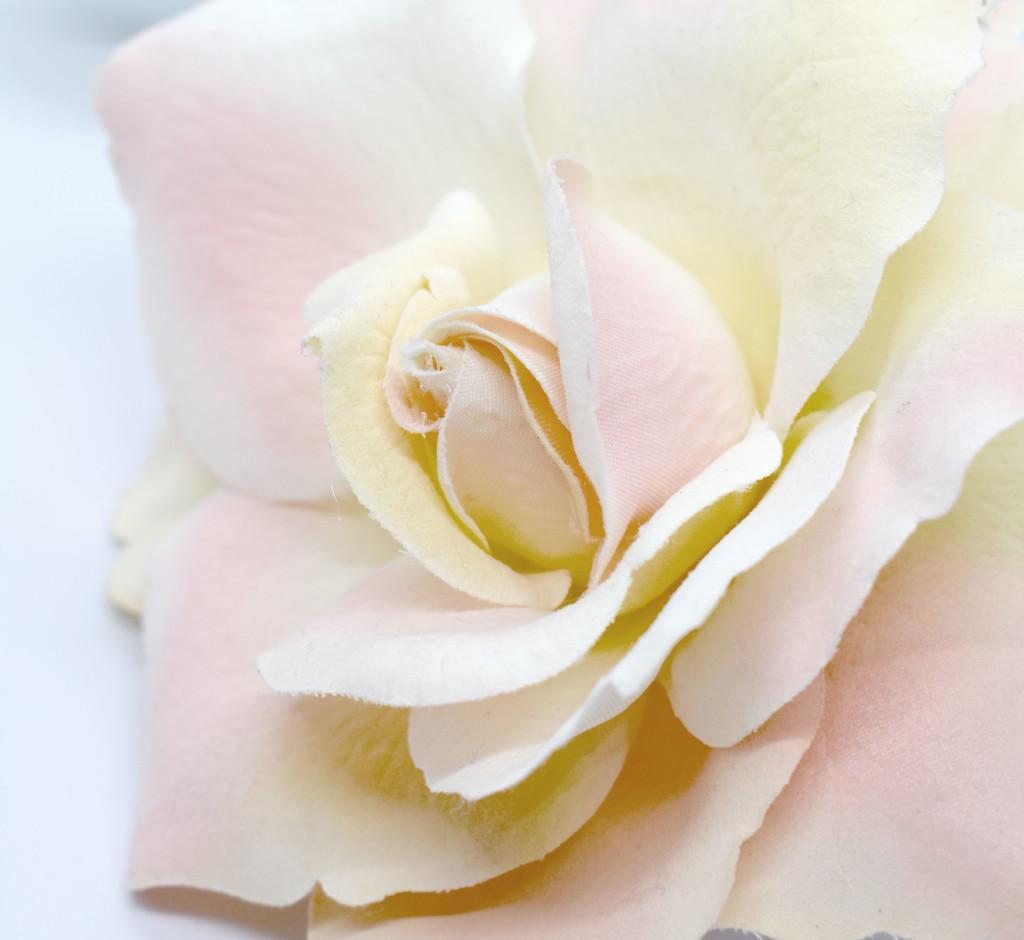 High Key Rose by homeschoolmom